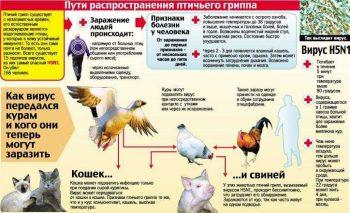 Грипп птиц. Памятка для населения