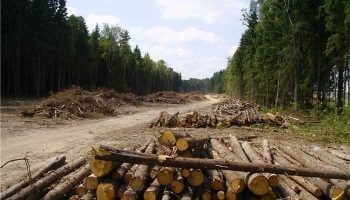 Лес рубят. Нарушений не выявлено