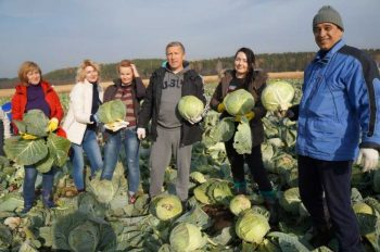 Сотрудники Администрации помогли с уборкой урожая