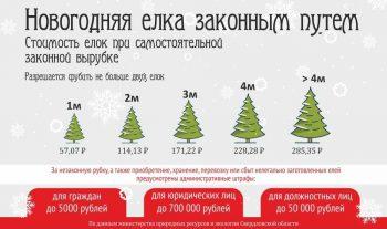 С 16 декабря лесничества области предоставляют жителям возможность самостоятельно срубить ель или сосну на Новый год