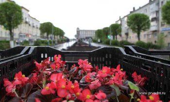 Клумбы Первоуральска будут украшать 150 тысяч цветов