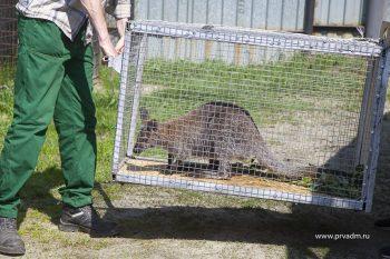 В первоуральском зоопарке теперь живет кенгуру