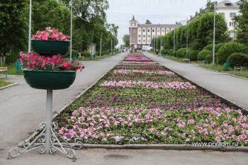 С центральных клумб в Первоуральске пропадают цветы