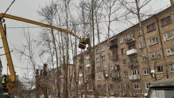 В этом году в городском округе кронируют 800 деревьев