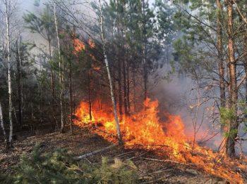В Первоуральске введен особый противопожарный режим!