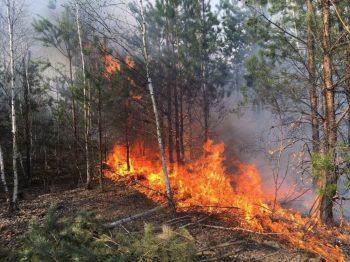 Крупный пожар произошел в лесу под Первоуральском. В опасности оказались отдыхающие санатория и садоводы