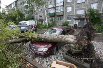 Если дерево упало на машину