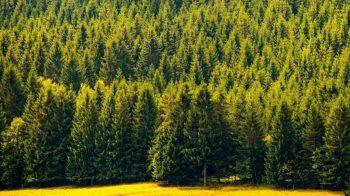 Жители города одобрили создание зеленого пояса Первоуральска