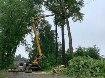 В этом году в Первоуральске кронируют 700 деревьев