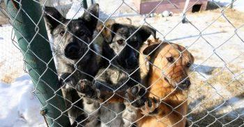 Отловом бездомных собак в Первоуральске будет заниматься местное общество защиты животных