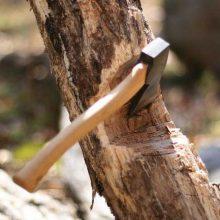 Меры реагирования населения при обнаружении незаконной рубки леса