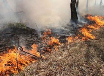 В Первоуральске введен режим чрезвычайной ситуации в лесах