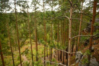 В Свердловской области введены ограничения на посещение лесов из-за опасности новых пожаров