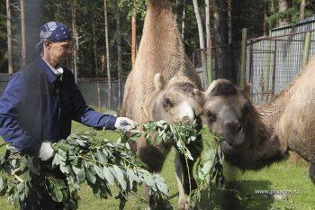 Мини-зоопарк открыл свои двери для посетителей