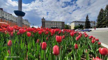 В центре Первоуральска распустились сотни тюльпанов