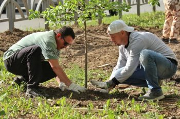 На центральных улицах Первоуральска высадили несколько десятков яблонь