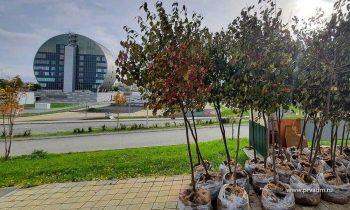 Рядом с Инновационным культурным центром высадили яблони