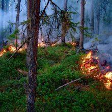 РЕЖИМ ЧРЕЗВЫЧАЙНОЙ СИТУАЦИИ В ЛЕСАХ введен на территории ГО Первоуральск