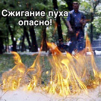 Тополиный пух – источник пожарной опасности!